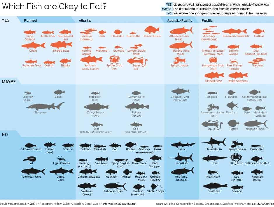 Que-Peixes-e-que-sao-Seguros-para-Consumir